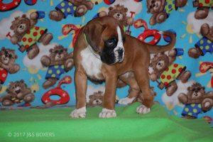 Feb-Puppies46