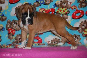 Feb-Puppies47