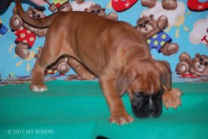 Feb-Puppies49