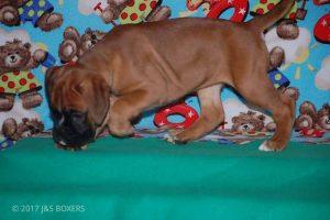 Feb-Puppies50