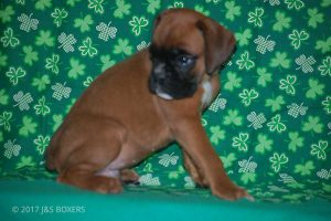 Nikita-Puppies09