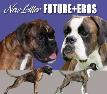 current euro boxer litter- future v eros