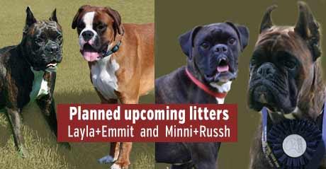 Upcoming litters, Layla, Emmit, Minni, Rush