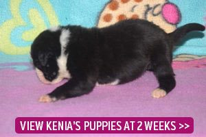2 week old puppies