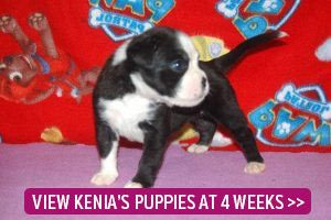 4 week old puppies link