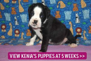 link to 5 week old puppies